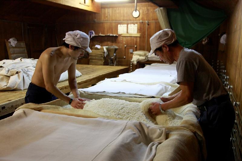 麹作り作業
